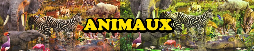 animaux copie