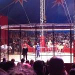 cirque (2) (800x600)